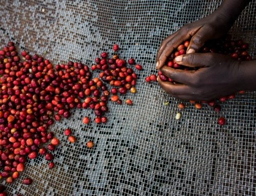 Burundi | Long Miles Coffee Project